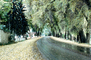 Wet Road, Street, Trees, Cottonwoods, Curve, CSMV02P14_09