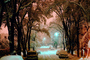 Trees Covered in Snow, snow storm, Nighttime, winter, cars, street