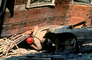 Cadaver Dog, German Shepard, Search and Rescue, Crushed Car, Collapsed House, Marina district, Loma Prieta Earthquake (1989), 1980's, DAEV01P12_16