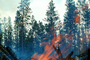 Trees, Forest Fire, Flames, DAFV03P12_09
