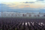 Flooded Rows of Vineyards, flood, Sonoma County, DASV01P09_03