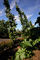 Springtime in Napa Valley, Gardens, Peju Winery, Rutherford, FAVD01_132
