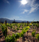 Springtime in Napa Valley, Vineyard Rows, Sun, Peju Winery, Rutherford, FAVD01_142