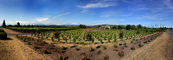 Springtime in Napa Valley, Vineyard Rows, Peju Winery, Panorama, Rutherford, FAVD01_144