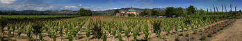Springtime in Napa Valley, Vineyard Rows, Peju Winery, Panorama, Rutherford, FAVD01_145