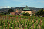 Springtime in Napa Valley, Vineyard Rows, Peju Winery, Rutherford, FAVD01_146
