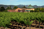 Springtime in Napa Valley, Vineyard Rows, Peju Winery, Rutherford, FAVD01_147