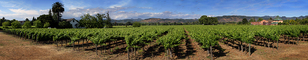 Springtime in Napa Valley, Vineyard Rows, Peju Winery, Panorama, Rutherford, FAVD01_148