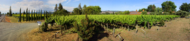 Springtime in Napa Valley, Panorama, FAVD01_152