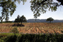 California, Rows, Vanishing Point, hills, Sonoma Valley, FAVD01_215