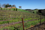 Paso Robles Wine Country, FAVD01_224