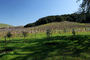 Paso Robles Wine Country, FAVD01_226