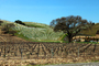 Paso Robles Wine Country, FAVD01_234