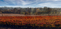 Vineyard Panorama, Napa, California