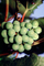 White Grapes, Grape Cluster, FAVV03P10_14