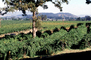 Sonoma County, California, FAVV03P15_04