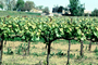 Sonoma County, California, FAVV03P15_16