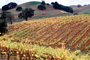 Sonoma County, autumn, FAVV04P05_10