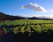 Rows of Vines, hills, clouds, mountains, FAVV04P13_12