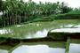 Terraced Rice Fields, Palm Trees, ponds, water, Island of Bali, FMAV02P03_08