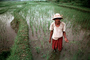 Man, Male, Worker, manual labor, smiles, hat, people, person, Rice Terraces, Terraced Rice Patties, FMDV01P02_10