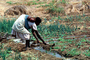 Cutting an irrigation ditch, Mother Farming with Child on her Back, near Tete, Mozambique, FMJV01P05_14