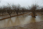 Highway-33, Orchard, Flooding, Flood, Vernalis, San Joaquin Valley, FMND03_057