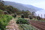 Big Sur Farm, FMNV01P09_14.0948
