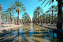 Palm Dates, water, irrigation, trees, desert, Coachella, California, FMNV02P01_16.0839