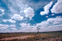 Eclipse Windmill, Irrigation, mechanical power, pump, cumulus clouds, Dirt, soil, FMNV02P09_03.0839