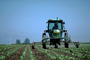 Lettuce, tractor, Machine, Mechanized, Mechanization, spraying, sprayer, Herbicide, Insecticide, Pesticide, FMNV04P02_08.0950