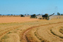 Rice, hay swather, fields, mechanization, machines, harvesting, Windrower, FMNV04P03_09.0950