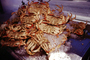 Cooked Dungeness Crabs on Ice, steamed, seafood, shellfish, Fishermans Wharf, FRBV05P15_17