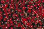 Cherries, texture, background, FTFV01P10_19.0953