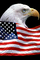 Eagle and Old Glory, Old Glory, USA, United States of America, Star Spangled Banner, GFLV01P09_12B
