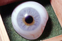 Eyeball, iris, pupil, glass eye, veins, Sclera