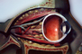 Lens, Cross section, Eyeball, iris, pupil, veins, bones, Sclera