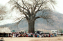 Well Baby Clinic, Baobab Tree, Adansonia, Rushinga, HOFV01P04_02