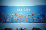 Sea Life, aquarium, water, mural, Classroom, 1960's