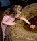 Girl playing with Sea Life, touch tank, hands-on, aquarium, sealife, starfish, hands-on exhibit, touch, KEPD01_058B