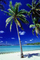 Palm Tree in the Sand, Beach, shadow, Island of Bora Bora