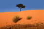 Lone Tree on a sand dune, Equanimity, NJQV01P02_01