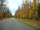 Autumn, fall colors, trees, leaves, forest, trees, woodland