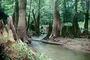 trees, lake, pond, forest, stream, water, NMTV01P05_03