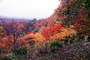 Fall Colors, autumn, trees, forest, hills, mountains, deciduous, NMTV01P05_08