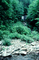 deciduous, forest, stream, rocks, NMTV01P05_18