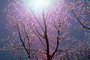 Ice, Sun, Tree, Cold, Chill, Chilled, Chilly, Cool, Frigid, Frosty, Frozen, Snowy, Winter, Wintry, NNIV01P02_12.0932