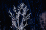 Ice, Tree, Cold, Chill, Chilled, Chilly, Cool, Frigid, Frosty, Frozen, Snowy, Winter, Wintry, Twig, NNIV01P02_19.0932