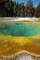 Morning Glory, Hot Spring, Geothermal Feature, activity, Extremophile, Thermophile, NNYV02P03_02.0938