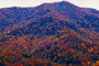 Mountain Top, Woodland, Forest, Trees, Hills, Valley, autumn, deciduous, NORV01P04_12.1260